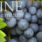 Castegnero uva riferimento - Colli Berici