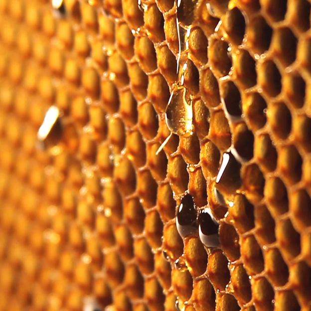 Un favo pieno di miele