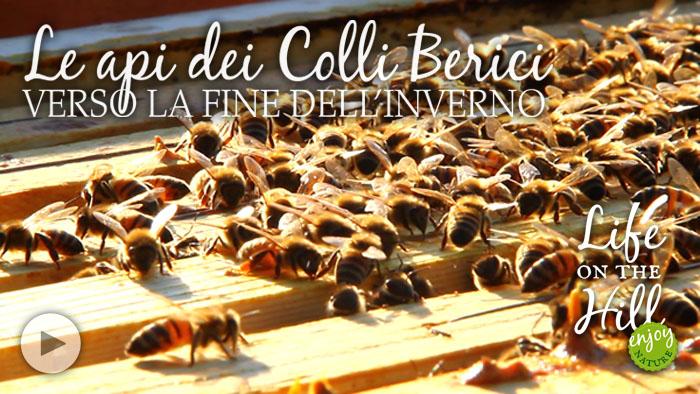 Le api dei Colli Berici