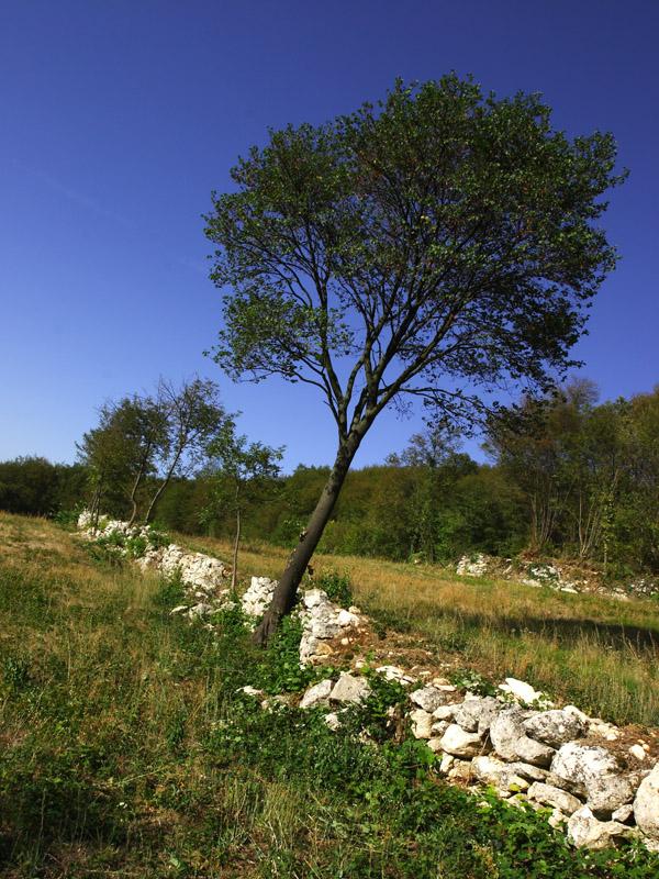 Sentiero 71 Della Cengia Colli Berici - muri a secco lungo il cammino