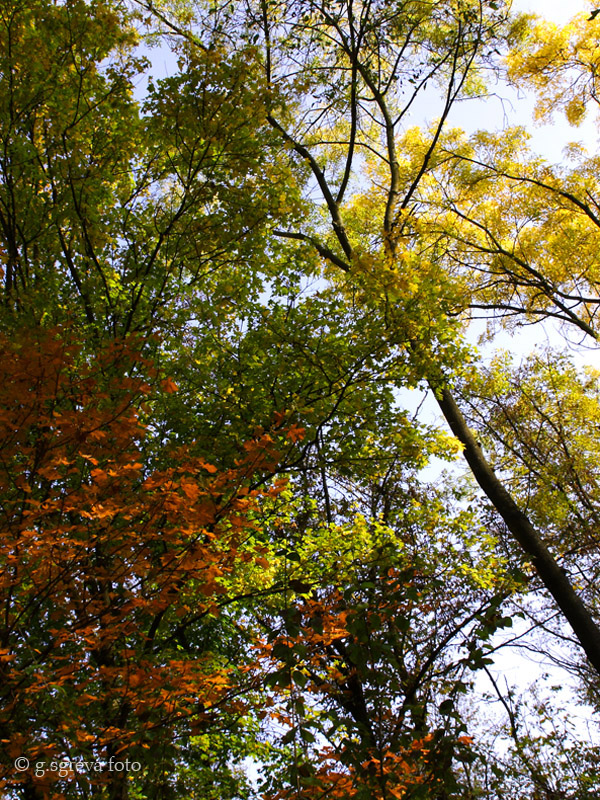 Sentiero della Guerra Brendola Colli Berici - Alberi in autunno