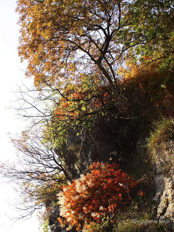 Sentiero della Guerra Brendola Colli Berici - La pineta in autunno