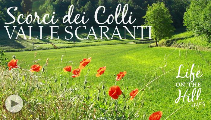 Valle Scaranti Colli Berici