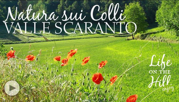 Valle Scaranto Colli Berici