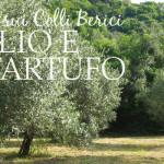 L'ulivo e il tartufo dei Colli Berici