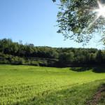 Tra boschi e caampi coltivati