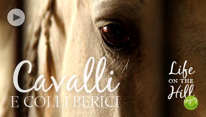 Cavalli e Colli Berici