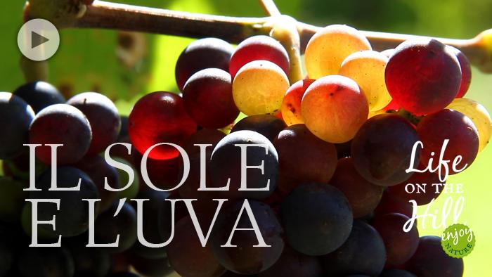 Il sole e l'uva nei Colli Berici