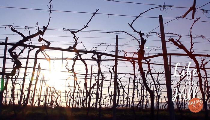 Lungo la strada del vino dei Colli Berici