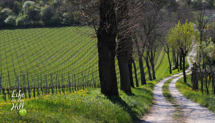 Sentiero 51 di Villa del Ferro