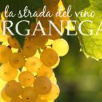 Colli Berici - Lungo la strada del vino - Garganega