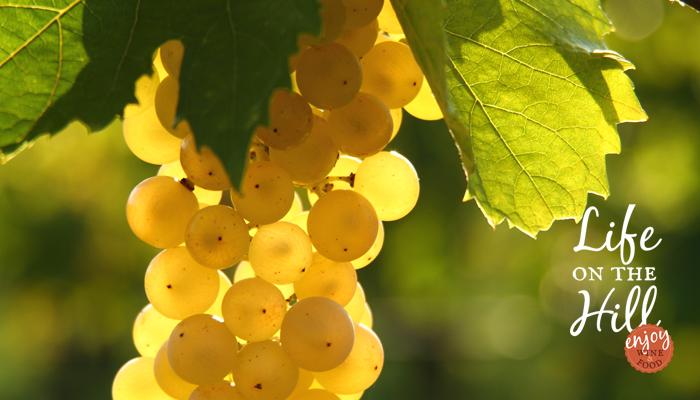 Lungo la strada del vino - Garganega - Colli Berici