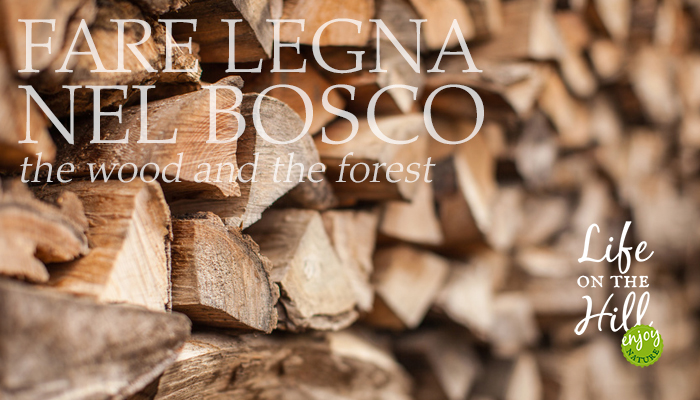Fare legna del bosco - Colli Berici - Life on the Hill