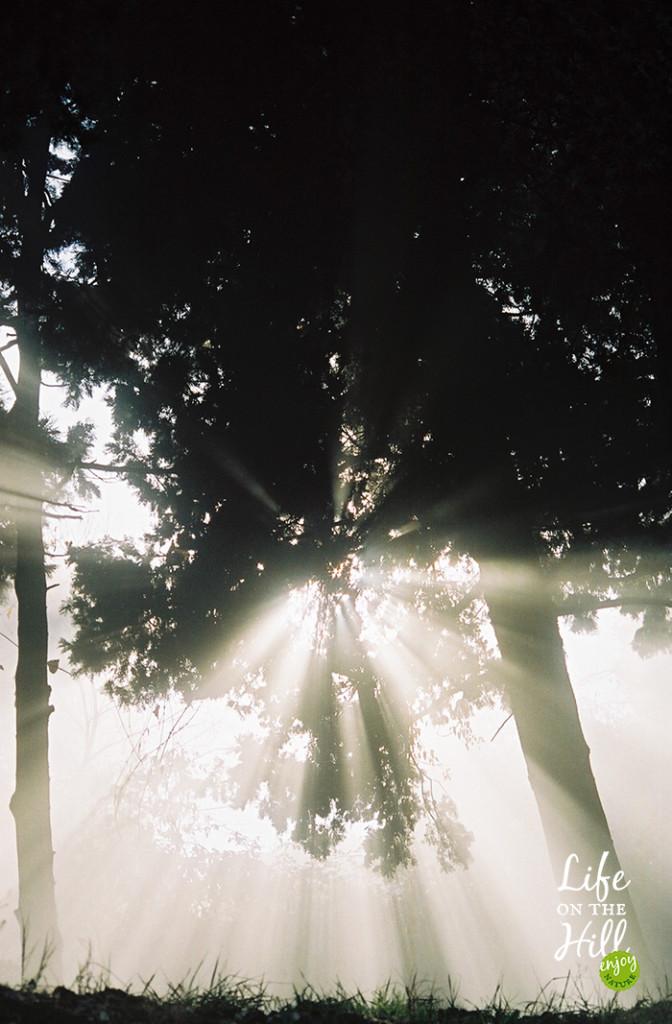 Il sole piove tra gli alberi dei Colli Berici interna 2