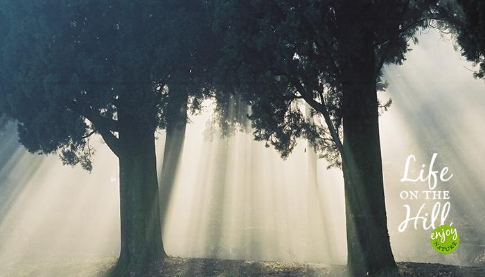 Il sole piove tra gli alberi dei Colli Berici interna - Life on the Hill