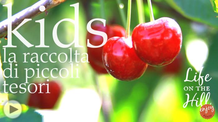Colli Berici ciliegie