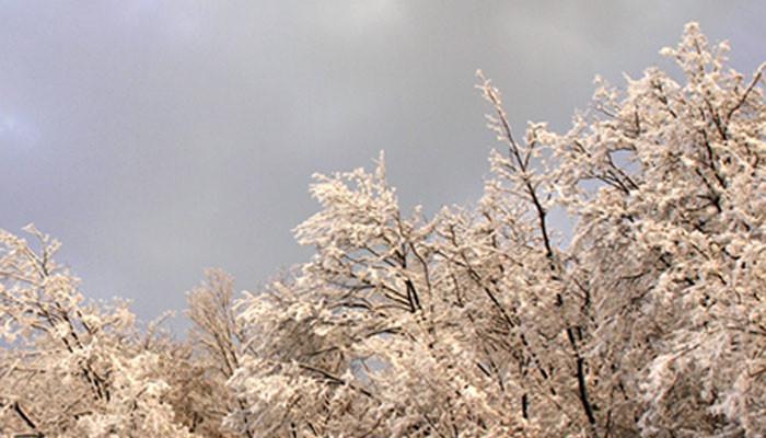 Neve sui boschi dei Colli Berici