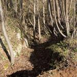 Sentiero 71 della Cengia Colli Berici - resti di trincee