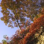 Sentiero della Guerra Brendola Colli Berici - Lungo il sentiero in autunno