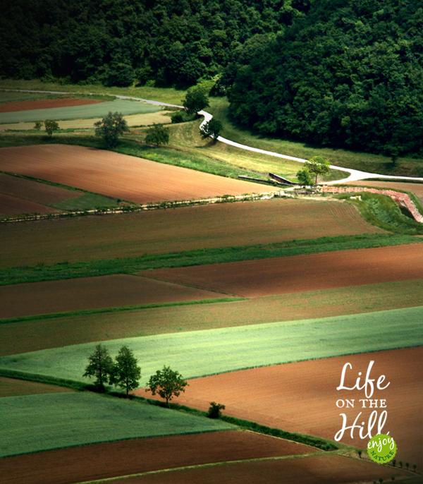 Valle di Fimon - Colli Berici - Pezze Lunghe interna