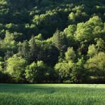 Boschi e campi coltivati lungo il sentiero