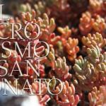 Nel microcosmo di San Donato 2 Colli berici