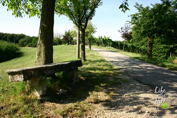 Un tratto del sentiero a Perarolo