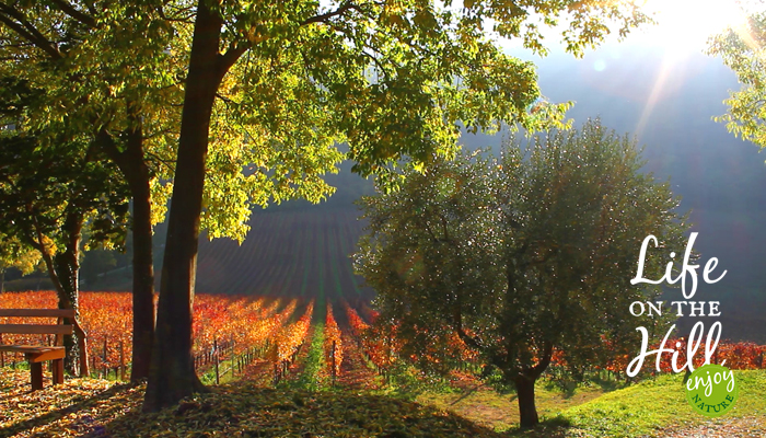 Autunno sui Colli Berici - interna - Life on the hill