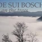 Onde di nebbia s'infrangono su rive di bosco - Colli Berici - Life on the hill