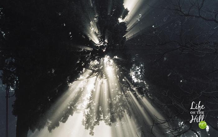 Il sole piove tra gli alberi dei Colli Berici interna1 - Life on the Hill