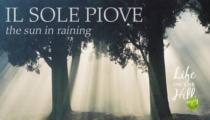 Il sole piove tra gli alberi dei Colli Berici