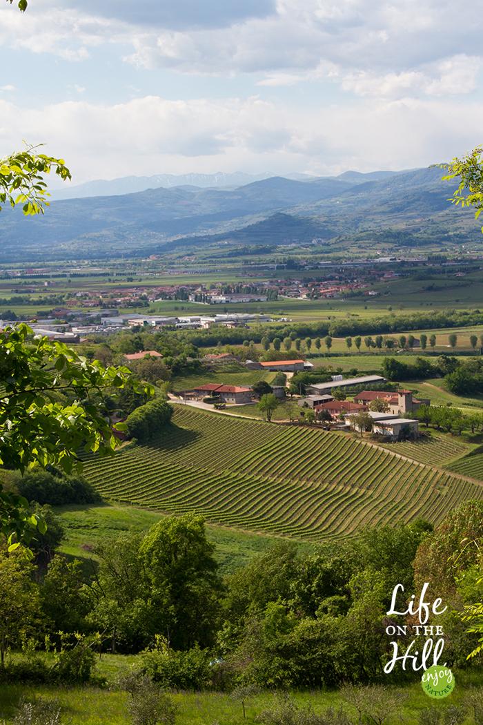 Colli Berici Sarego 1 - Life on the Hill