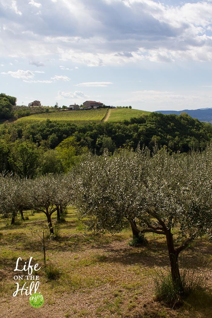 Colli Berici Sarego 3 - Life on the Hill