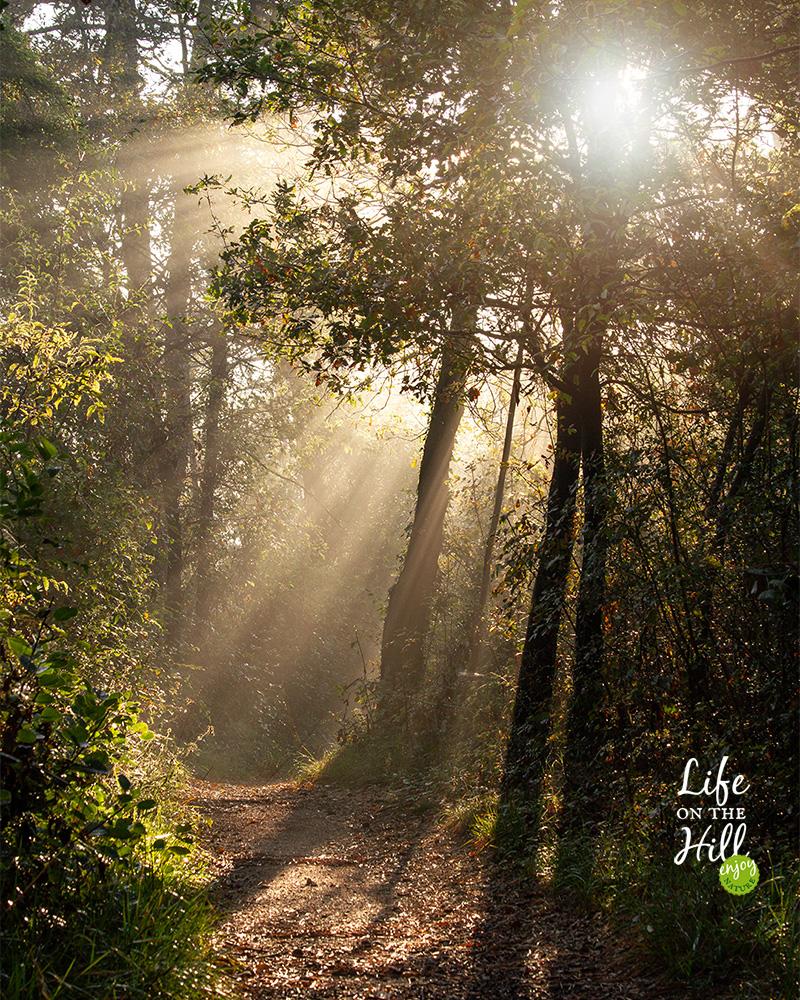 passeggiata bosco