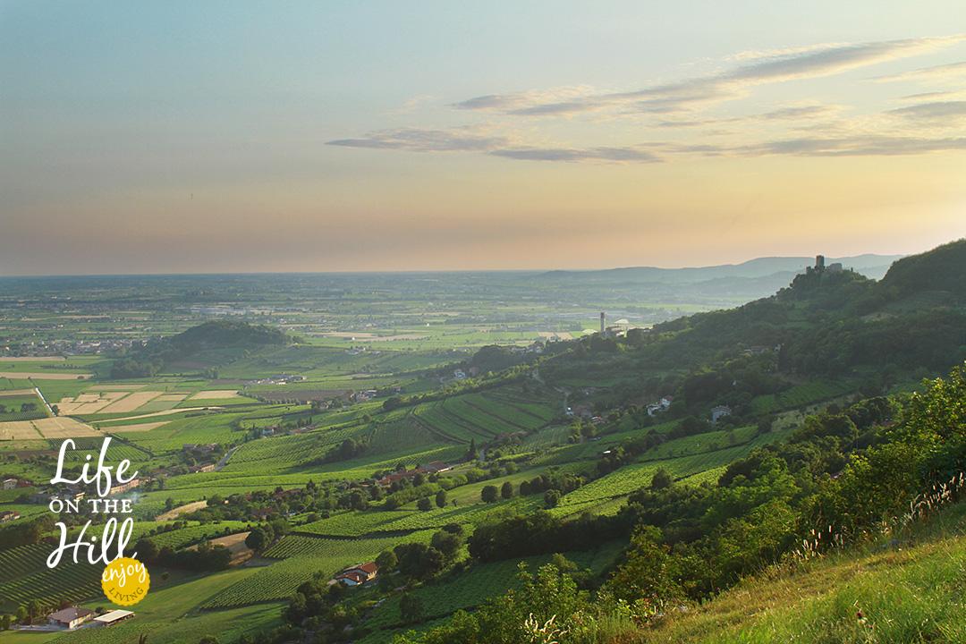Sentieri Colli Berici 32 monti comunali Brandola